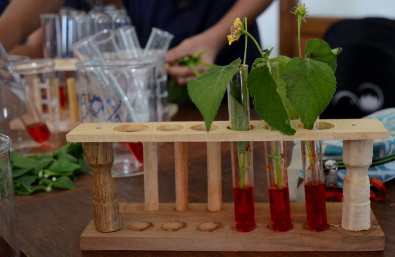 plant transpiration experiment